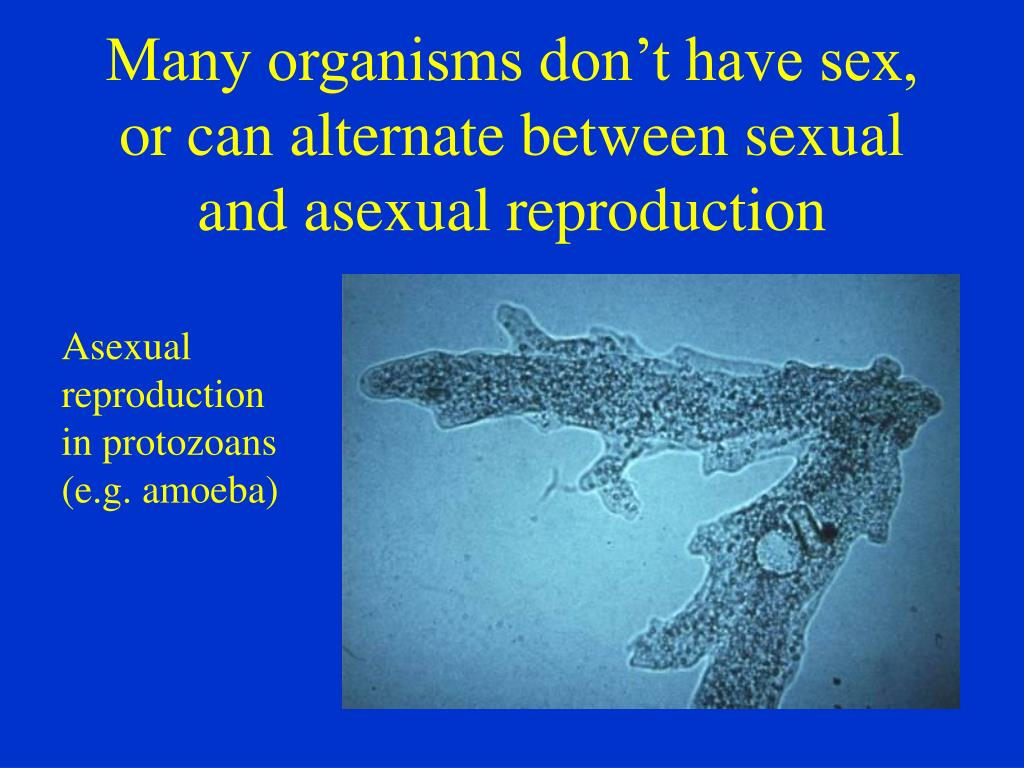 Many organisms don't have sex, or can alternate between sexual and asexual reproduction