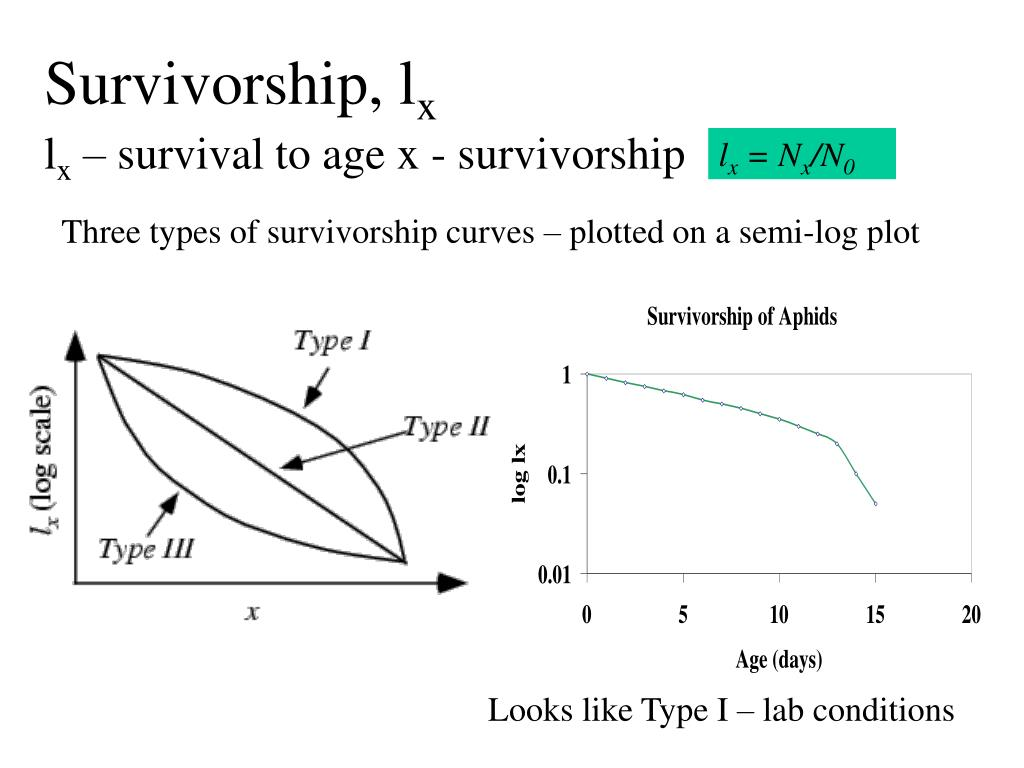 Survivorship, l