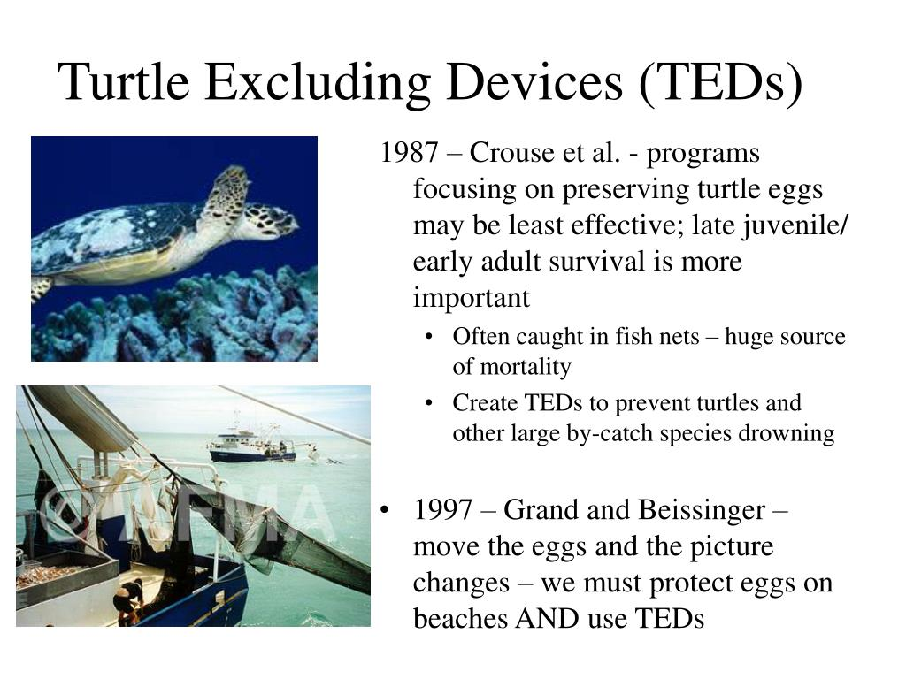 Turtle Excluding Devices (TEDs)