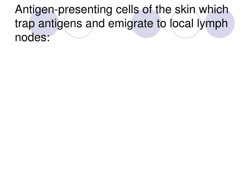 Antigen-presenting cells of the skin which trap antigens and emigrate to local lymph nodes: