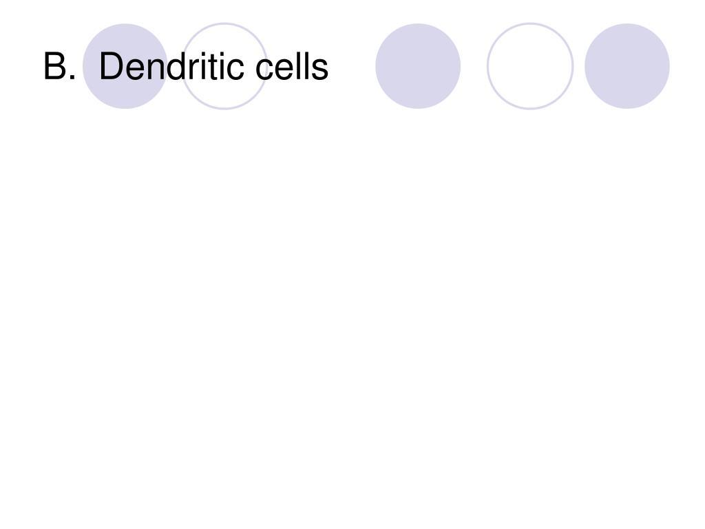 B.  Dendritic cells
