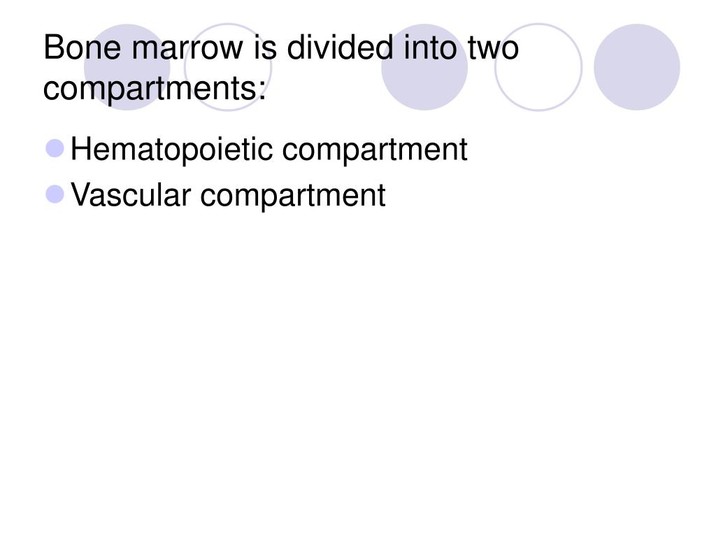 Bone marrow is divided into two compartments: