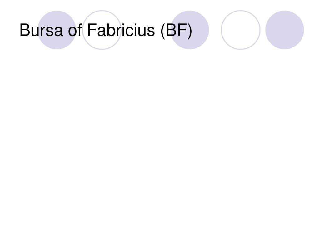 Bursa of Fabricius (BF)
