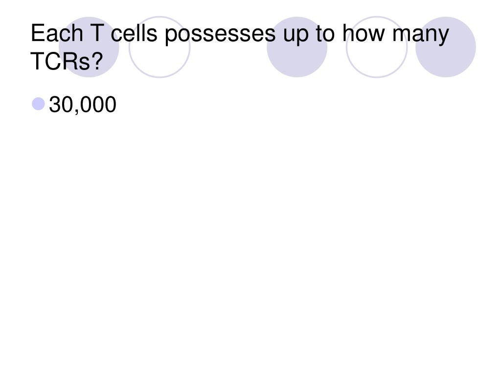 Each T cells possesses up to how many TCRs?