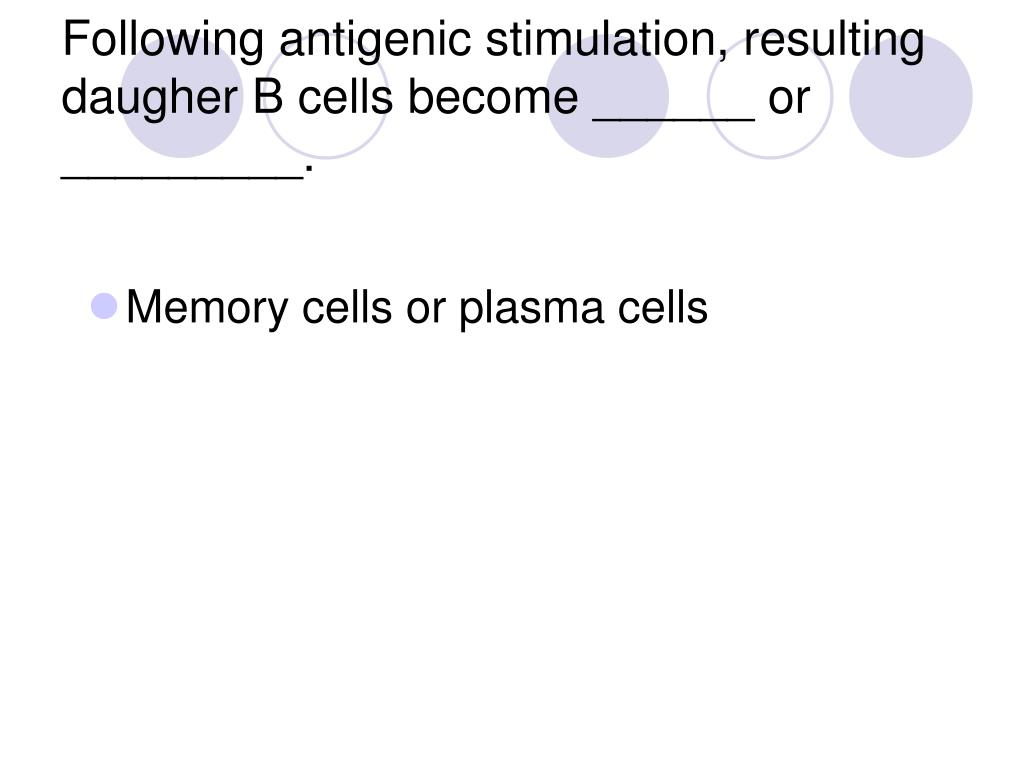 Following antigenic stimulation, resulting daugher B cells become ______ or _________.