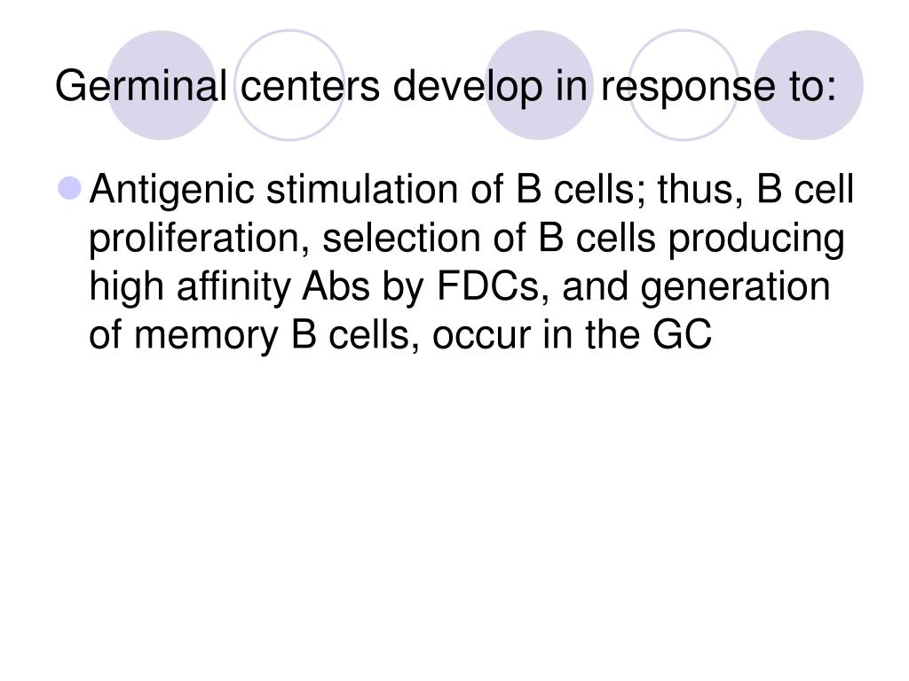 Germinal centers develop in response to: