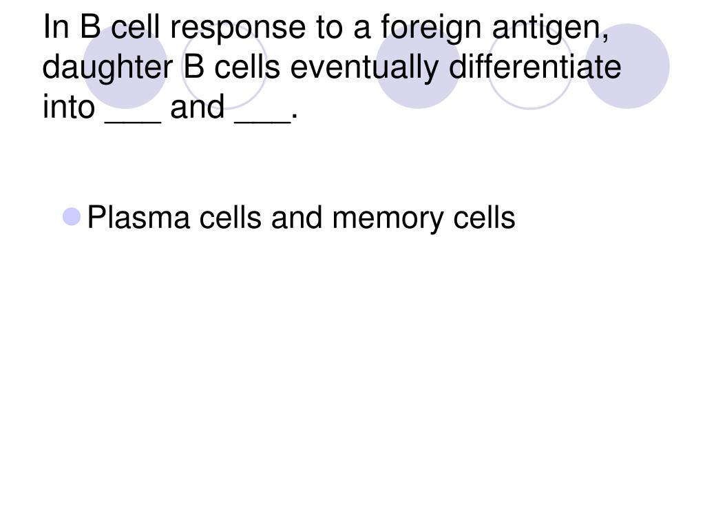 In B cell response to a foreign antigen, daughter B cells eventually differentiate into ___ and ___.