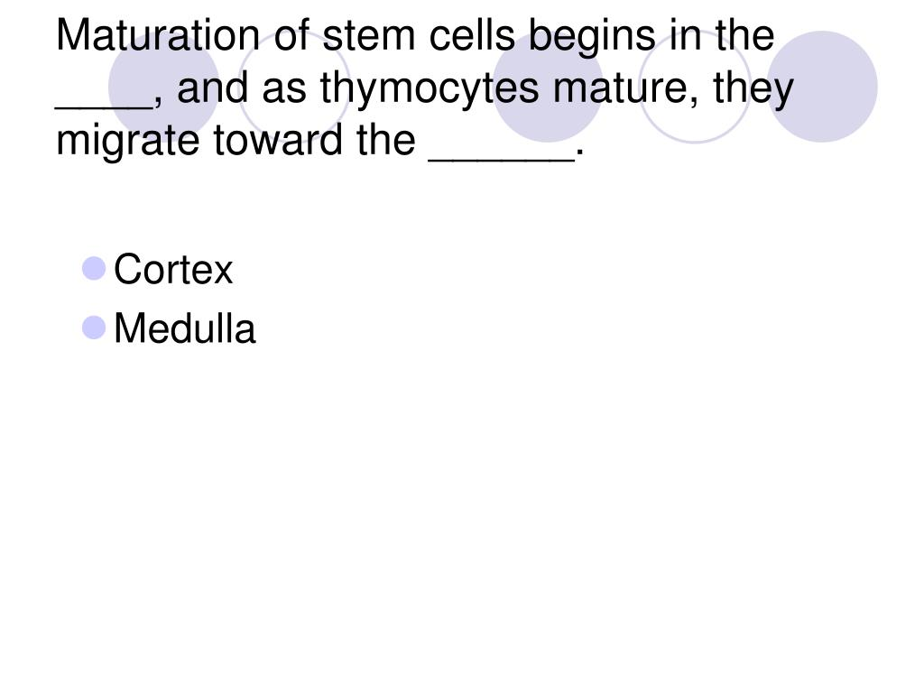 Maturation of stem cells begins in the ____, and as thymocytes mature, they migrate toward the ______.