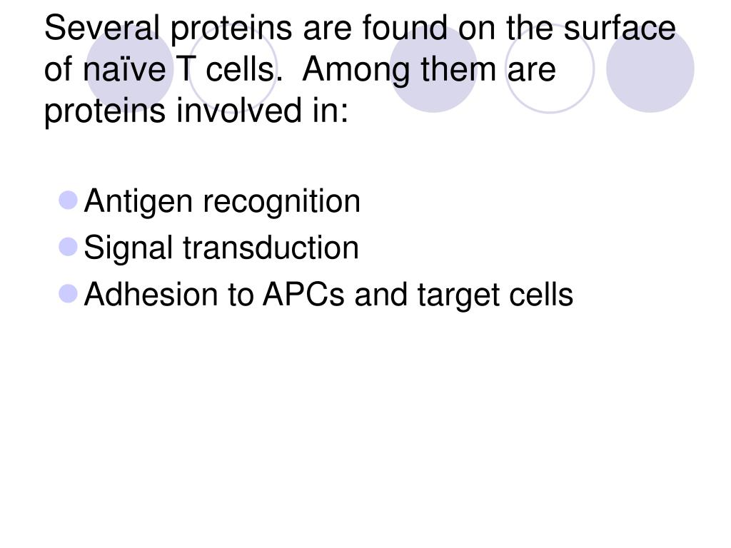 Several proteins are found on the surface of naïve T cells.  Among them are proteins involved in: