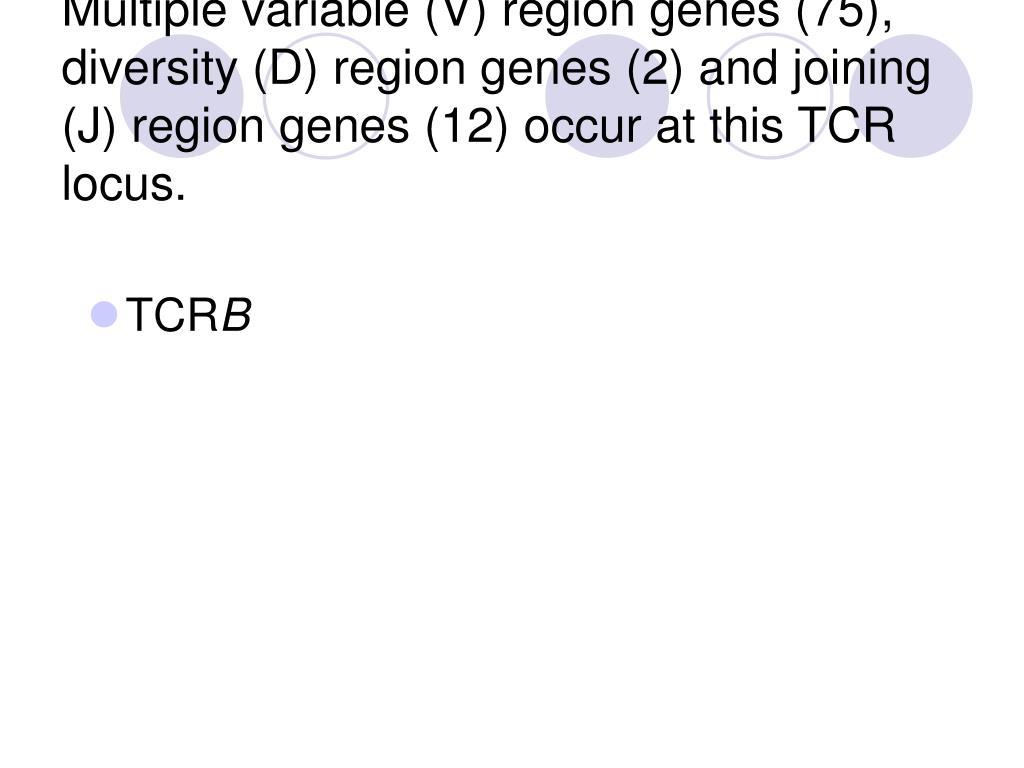 Multiple variable (V) region genes (75), diversity (D) region genes (2) and joining (J) region genes (12) occur at this TCR locus.