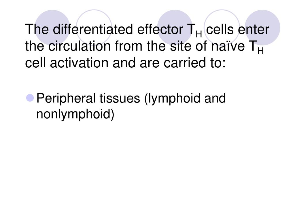 The differentiated effector T