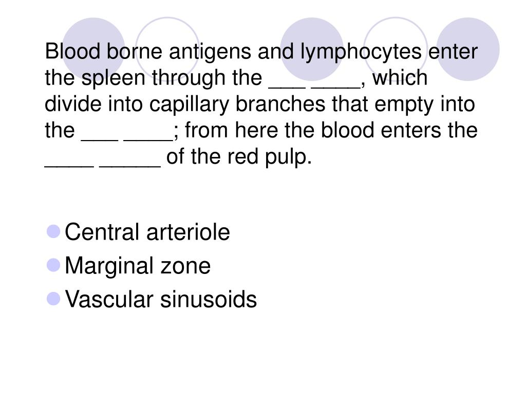 Blood borne antigens and lymphocytes enter the spleen through the ___ ____, which divide into capillary branches that empty into the ___ ____; from here the blood enters the ____ _____ of the red pulp.