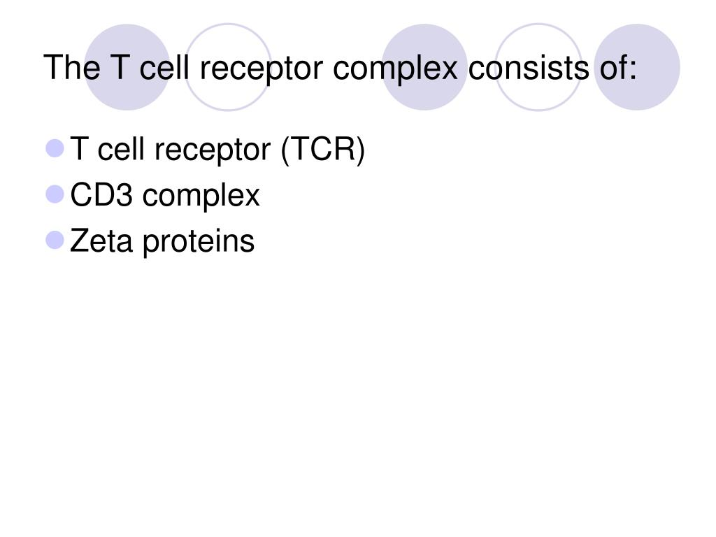 The T cell receptor complex consists of: