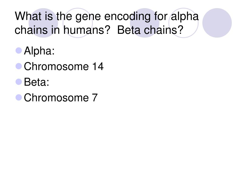 What is the gene encoding for alpha chains in humans?  Beta chains?