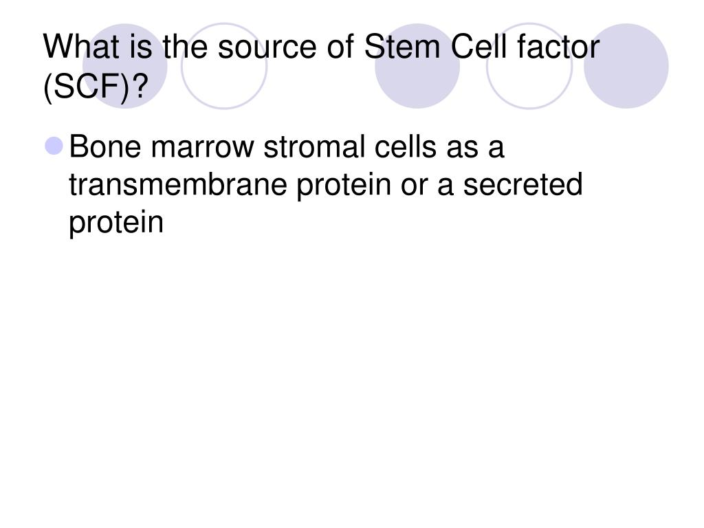 What is the source of Stem Cell factor (SCF)?