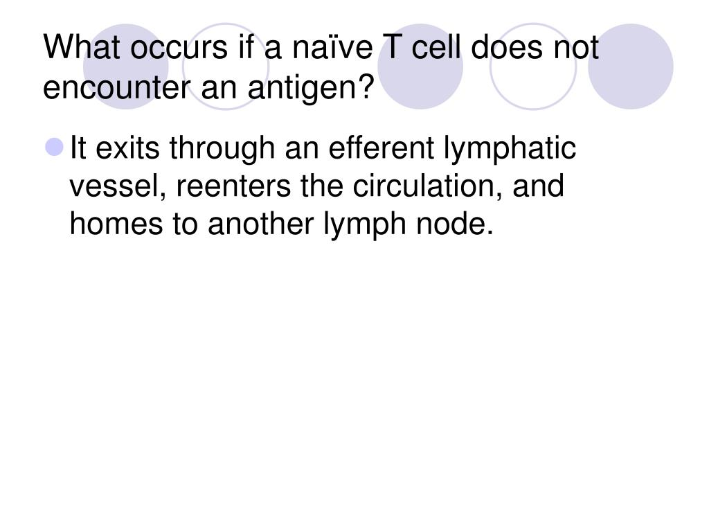 What occurs if a naïve T cell does not encounter an antigen?