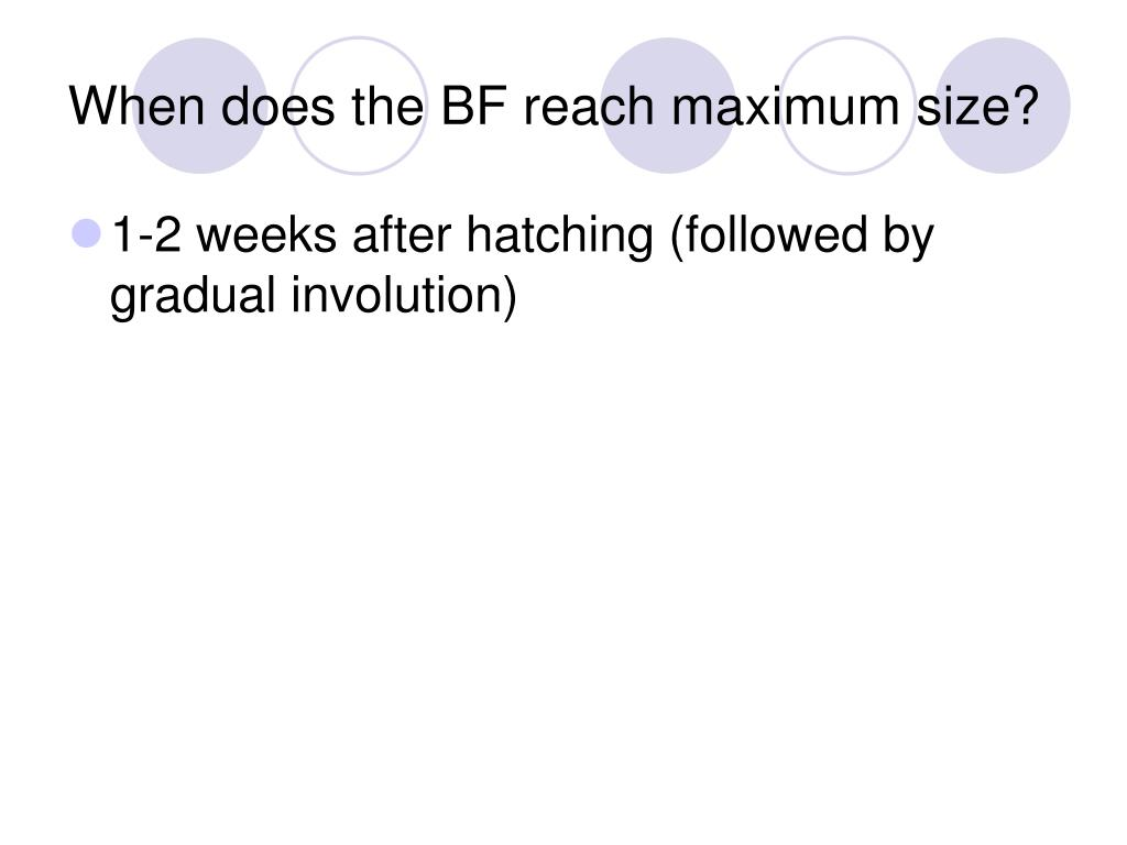 When does the BF reach maximum size?