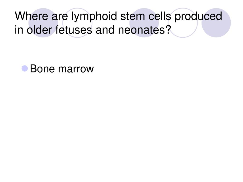Where are lymphoid stem cells produced in older fetuses and neonates?