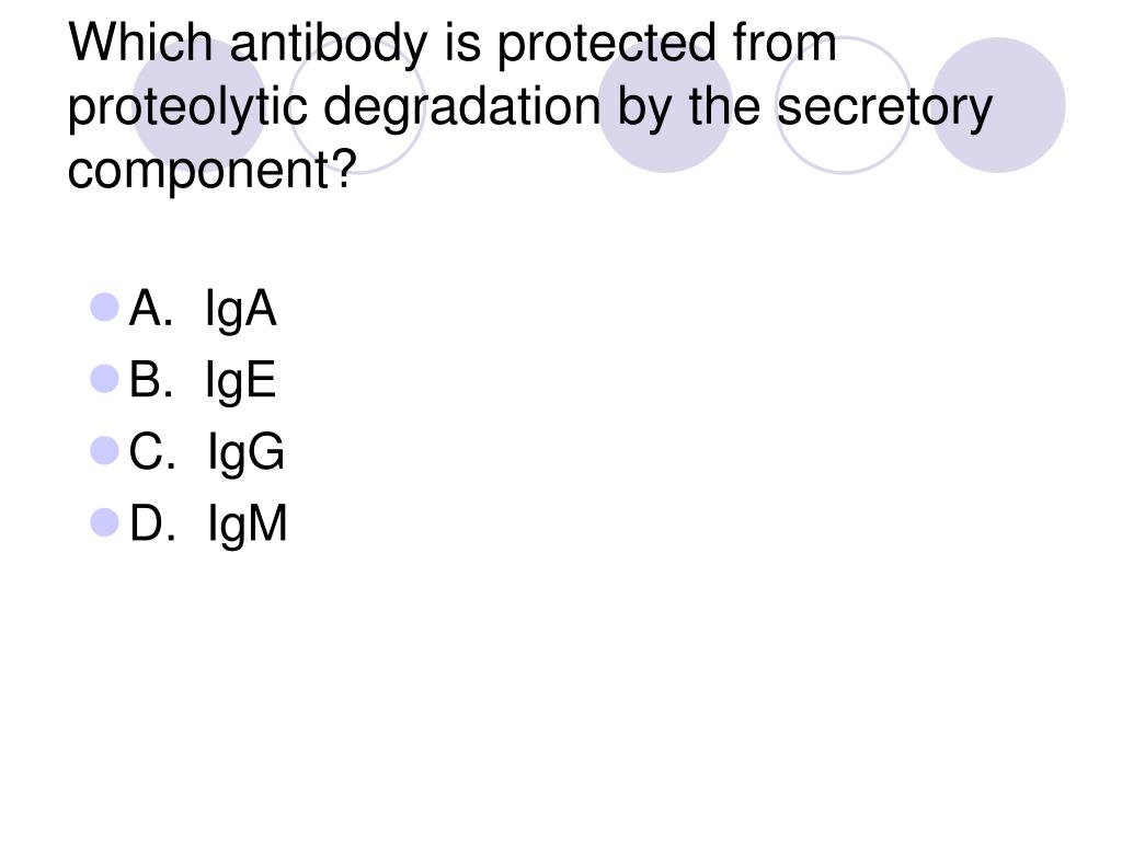 Which antibody is protected from proteolytic degradation by the secretory component?