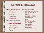 developmental stages14