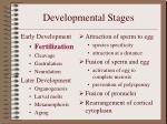 developmental stages4