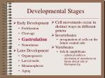 developmental stages7