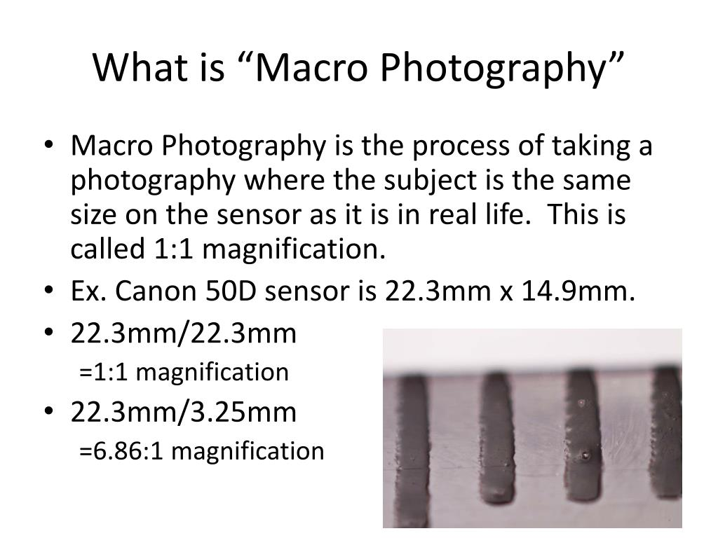 "What is ""Macro Photography"""