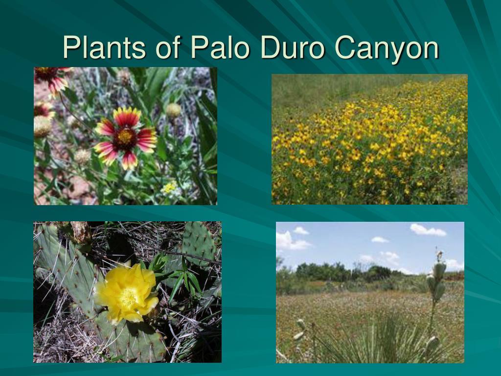 Plants of Palo Duro Canyon