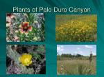 plants of palo duro canyon