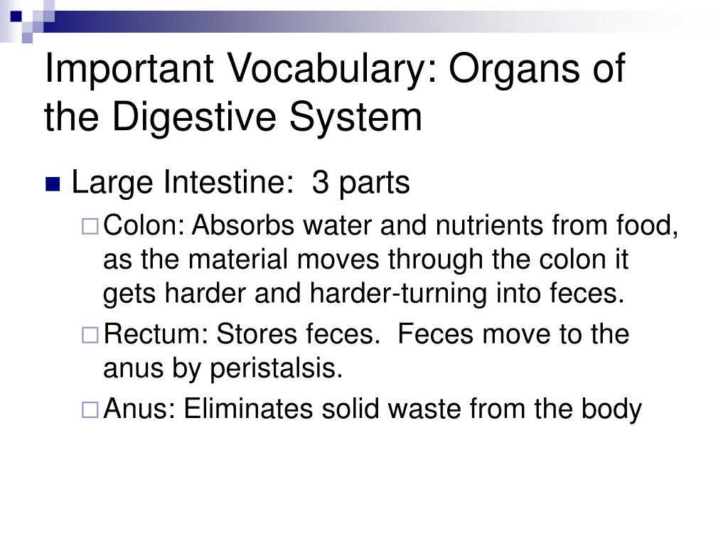 Important Vocabulary: Organs of the Digestive System