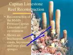 capitan limestone reef reconstruction