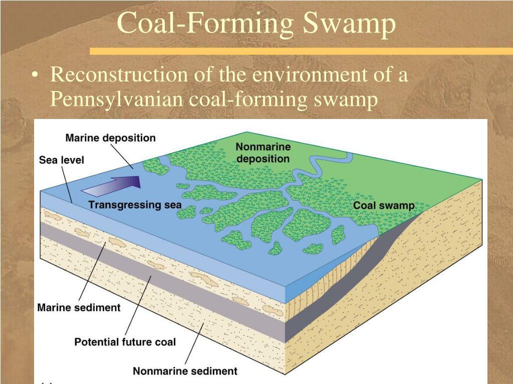 Coal-Forming Swamp
