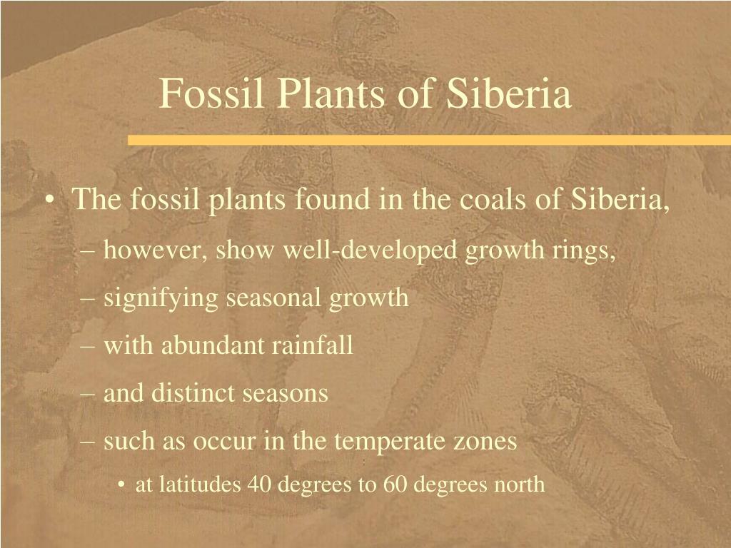Fossil Plants of Siberia