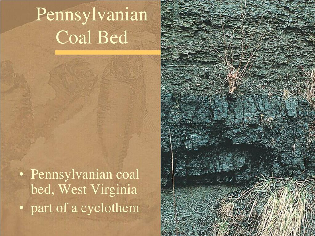 Pennsylvanian Coal Bed