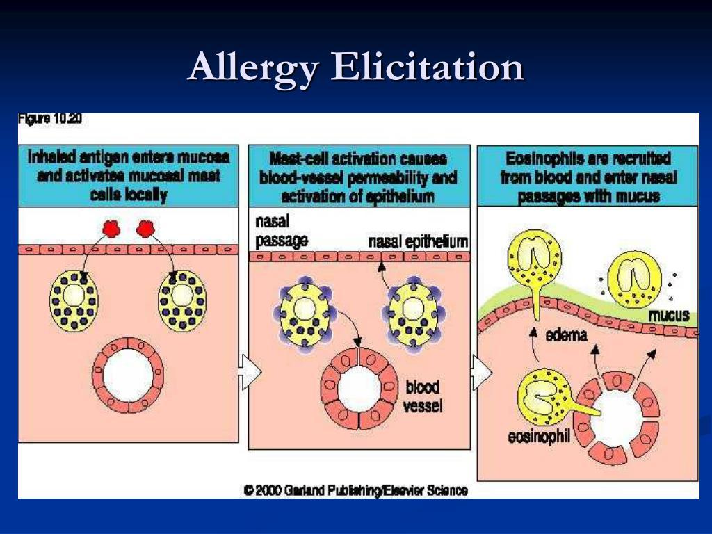 Allergy Elicitation