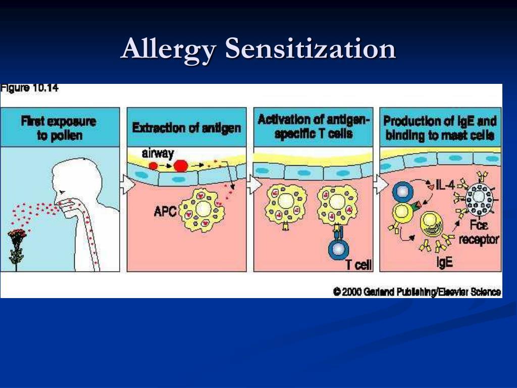 Allergy Sensitization