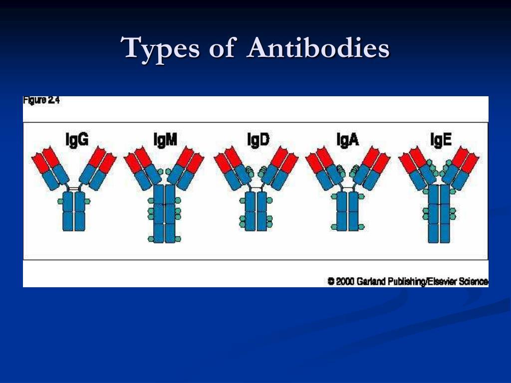 Types of Antibodies