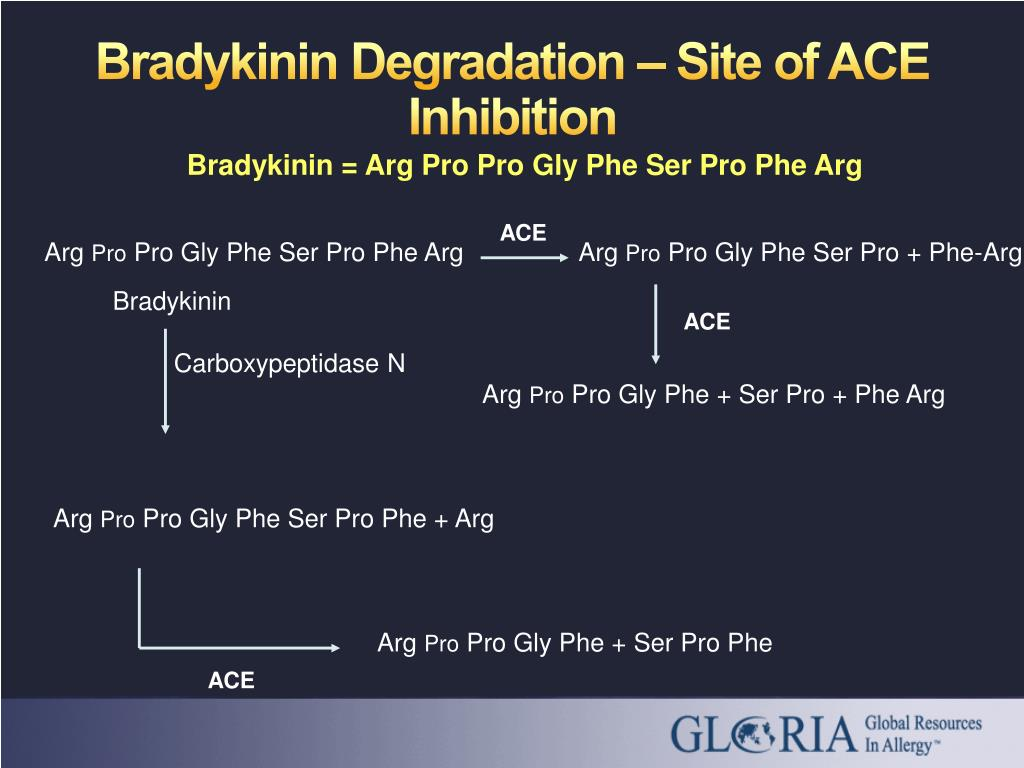 Bradykinin Degradation – Site of ACE Inhibition