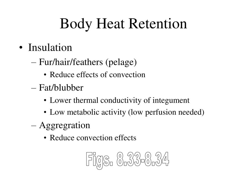 Body Heat Retention