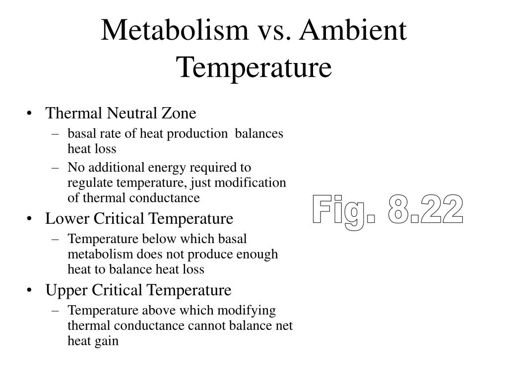 Metabolism vs. Ambient Temperature