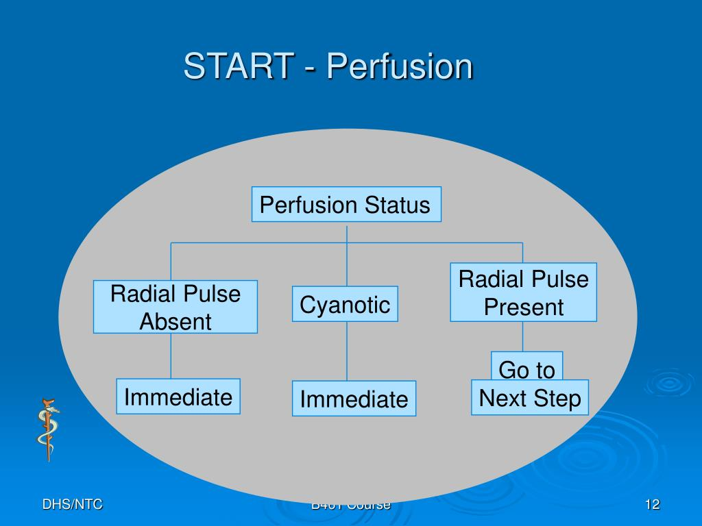 START - Perfusion