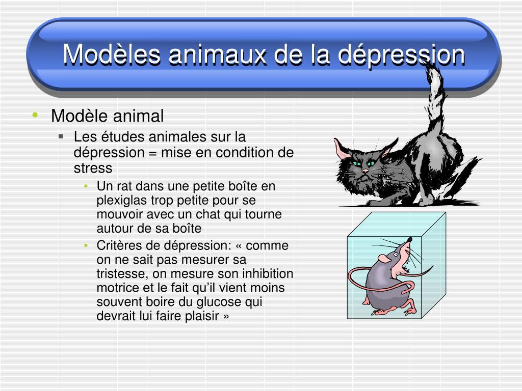Modèles animaux de la dépression