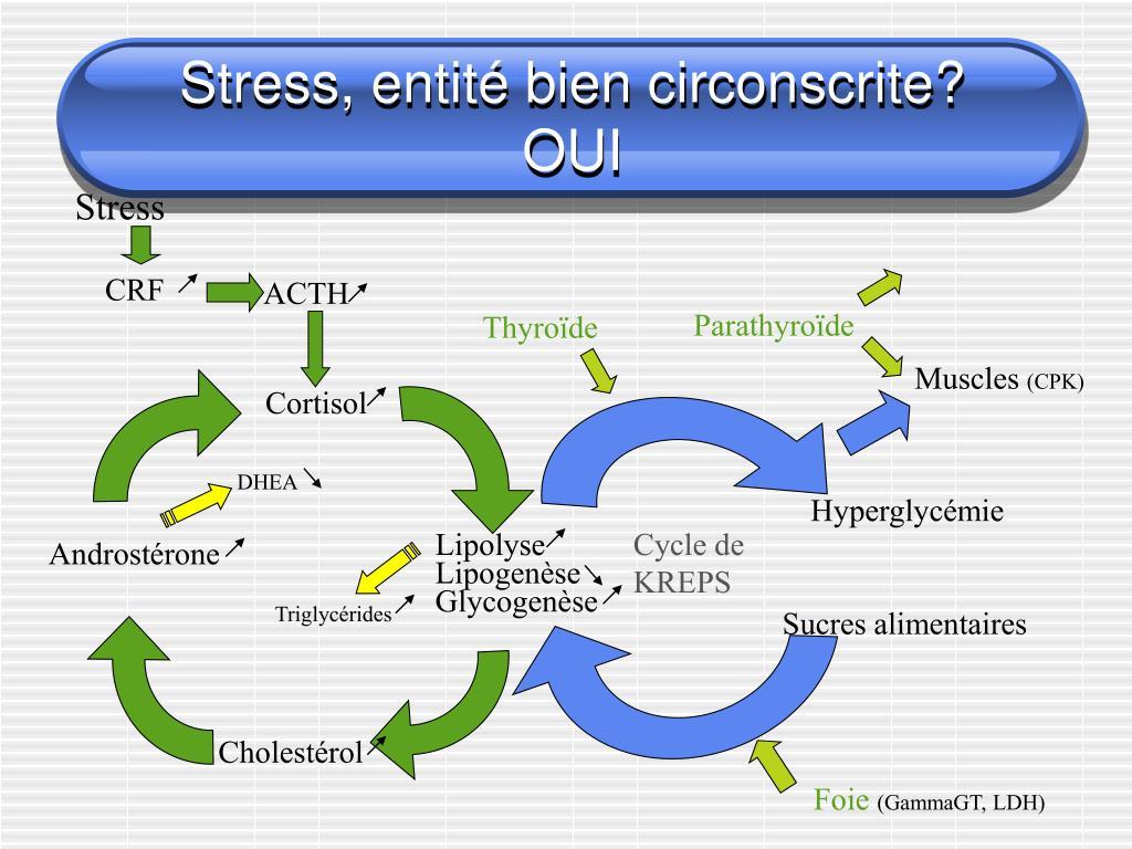 Stress, entité bien circonscrite?