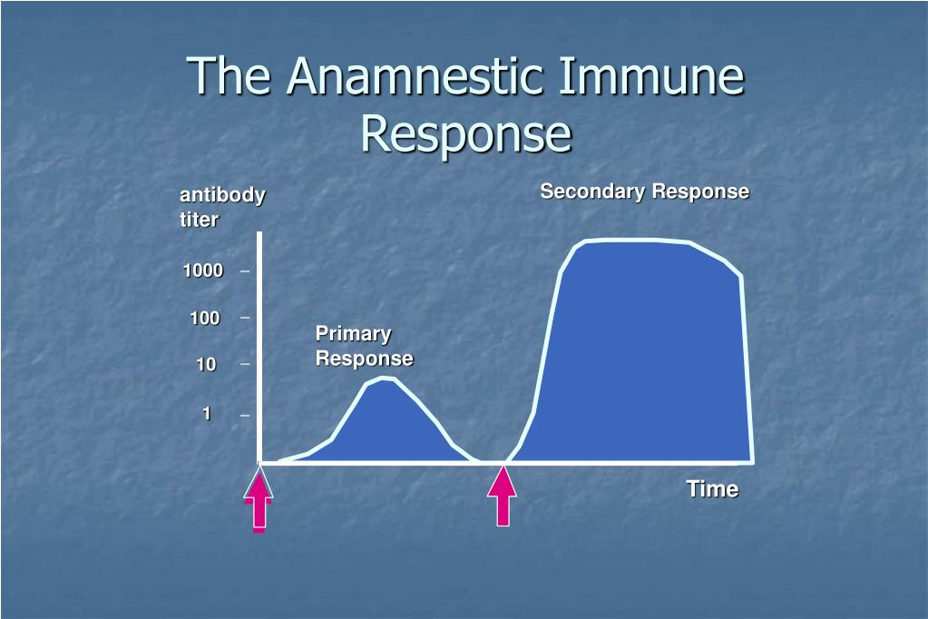 The Anamnestic Immune Response