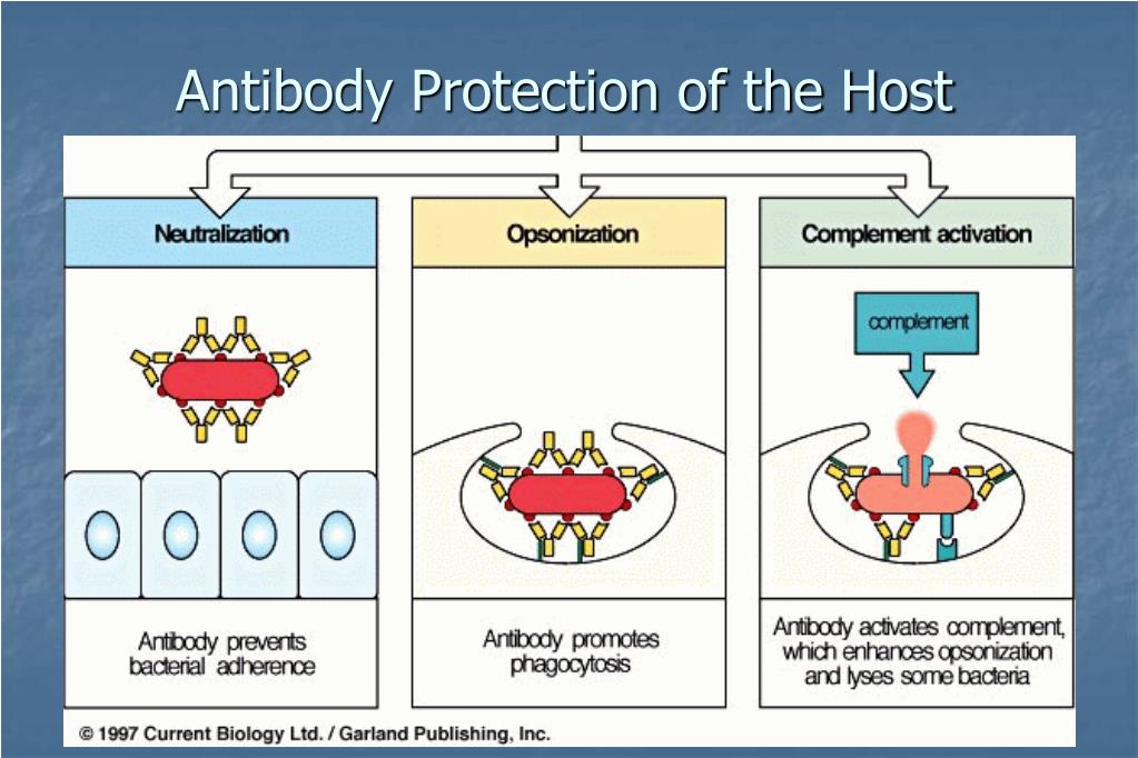 Antibody Protection of the Host