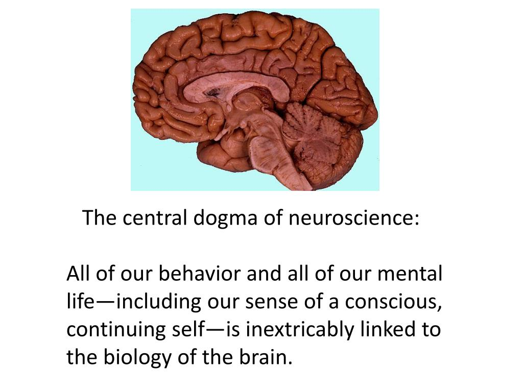 The central dogma of neuroscience: