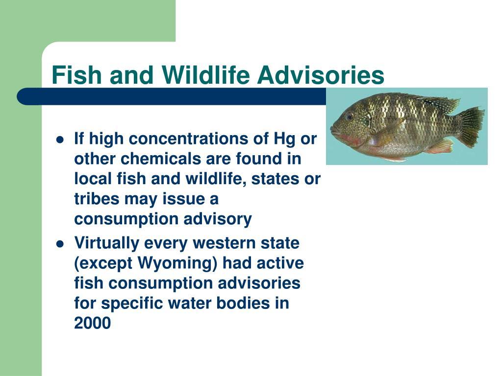 Fish and Wildlife Advisories