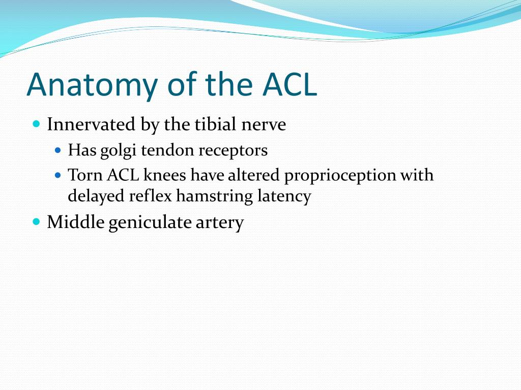 Anatomy of the ACL