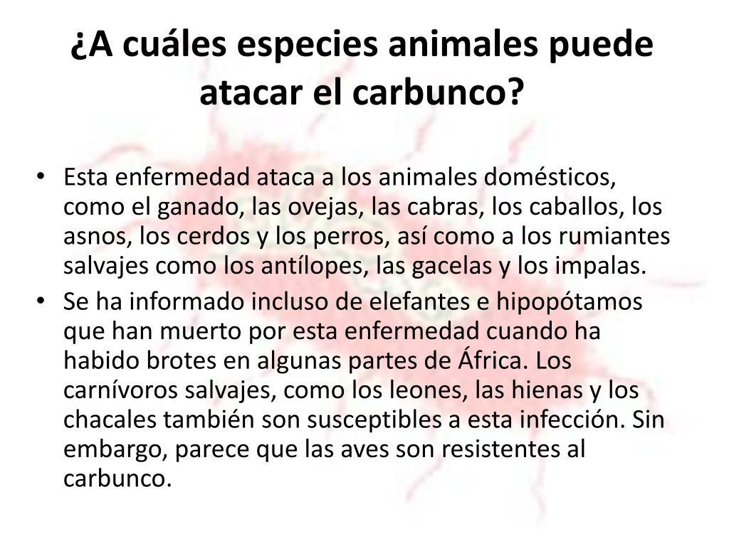 ¿A cuáles especies animales puede atacar el carbunco?