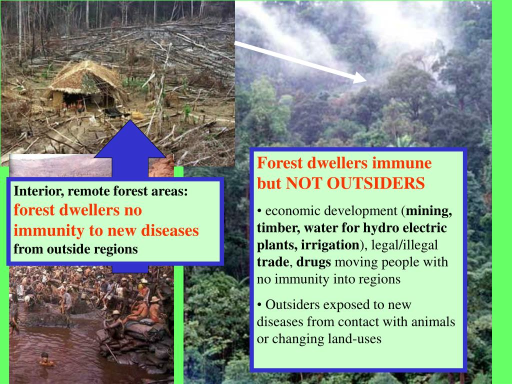 Forest dwellers immune but NOT OUTSIDERS